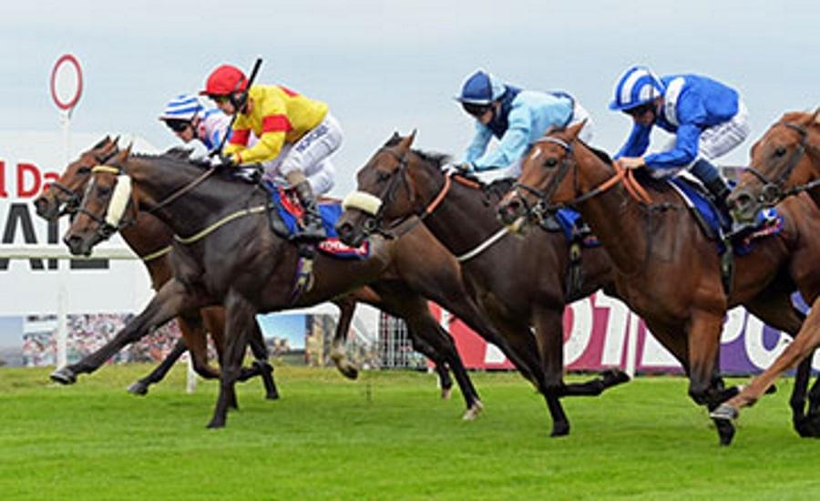 captain-gerrard-stakes-winner