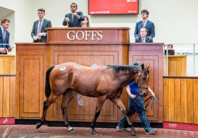 Heeraat Dominates Silver Yearling Sale