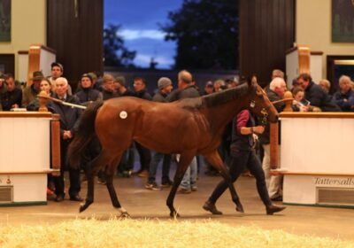 Mickley Consigns Sale-Topper at Tattersalls!